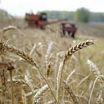 Продлен мораторий на экспорт зерна