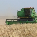 Рост цен на зерновые