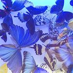 Райские бабочки в подарок