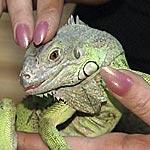 Самая привлекательная… рептилия