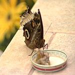 Дом для бабочек
