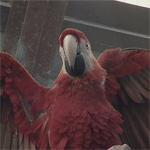 Московский зоопарк. Птицы