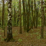 Подмосковье хочет управлять своими лесами