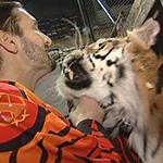 Тигры братьев Запашных