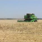 Ожидается  новый скачок цен на продовольствие