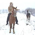 Лошадиный загон