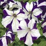 Фестиваль клубов цветоводства «Цветы в доме 2009»